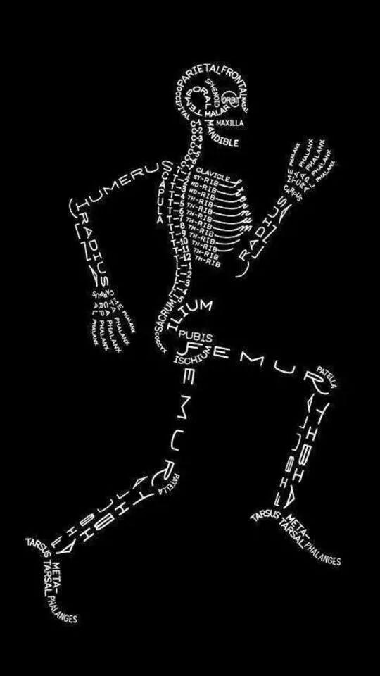 Los huesos del cuerpo humano en una fotografía